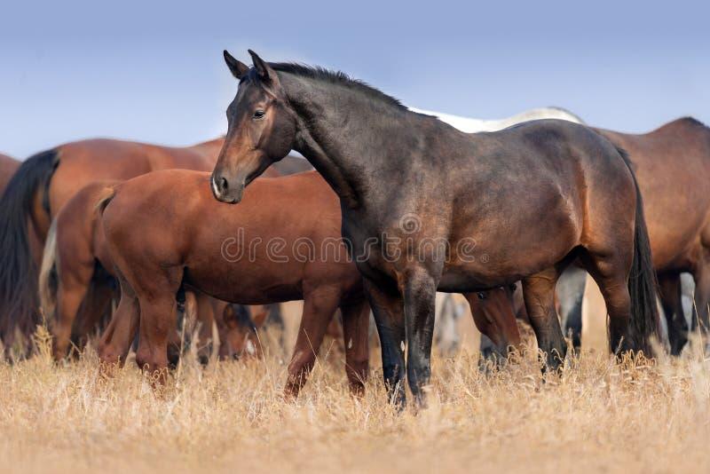 Cavallo sul pascolo fotografie stock libere da diritti
