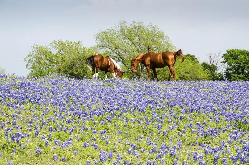 Cavallo sul pascolo - cofani blu fotografie stock libere da diritti