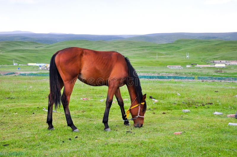 Cavallo sul pascolo fotografia stock libera da diritti