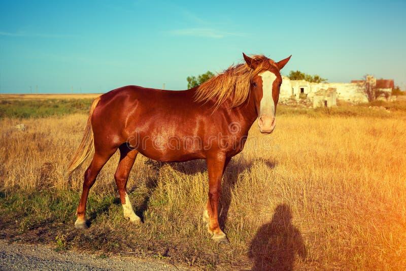 Cavallo sul prato fotografia stock libera da diritti