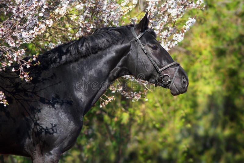 Cavallo sull'albero del fiore immagini stock