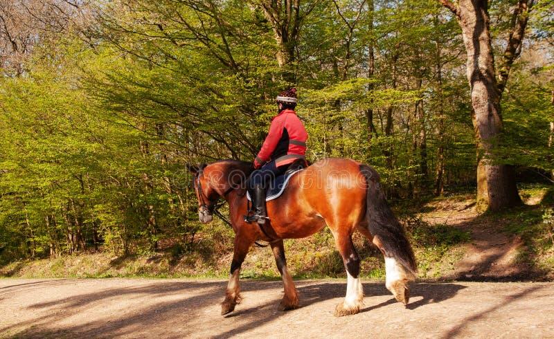 Cavallo sulla foresta bridleway fotografia stock