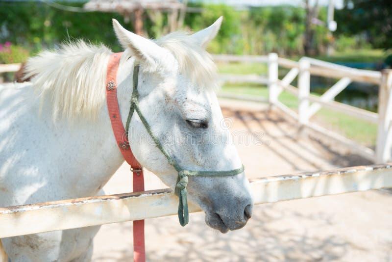 Cavallo sulla natura Ritratto di un cavallo, cavallo bianco fotografia stock libera da diritti
