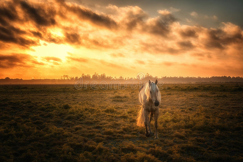 Cavallo in un pascolo con il tramonto arancio fotografia stock libera da diritti