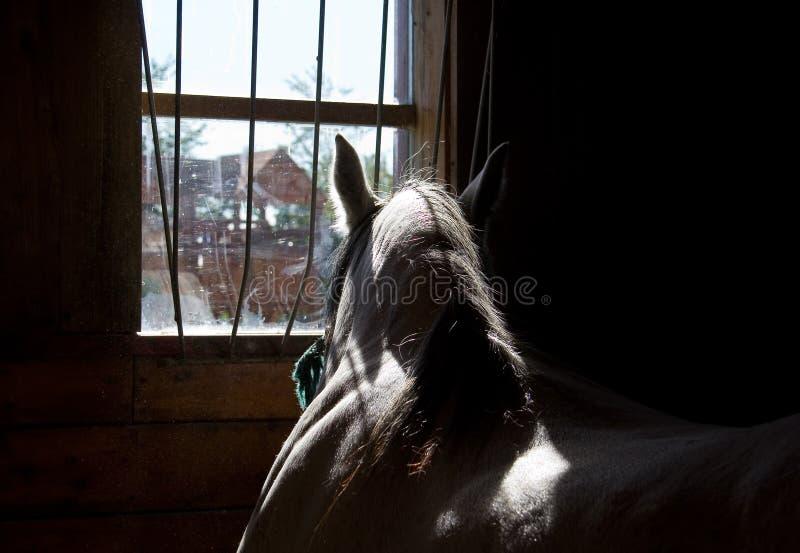 Cavallo in una scuderia immagini stock
