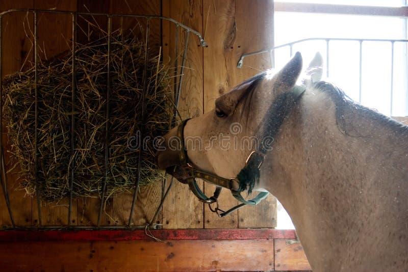 Cavallo in una scuderia fotografie stock