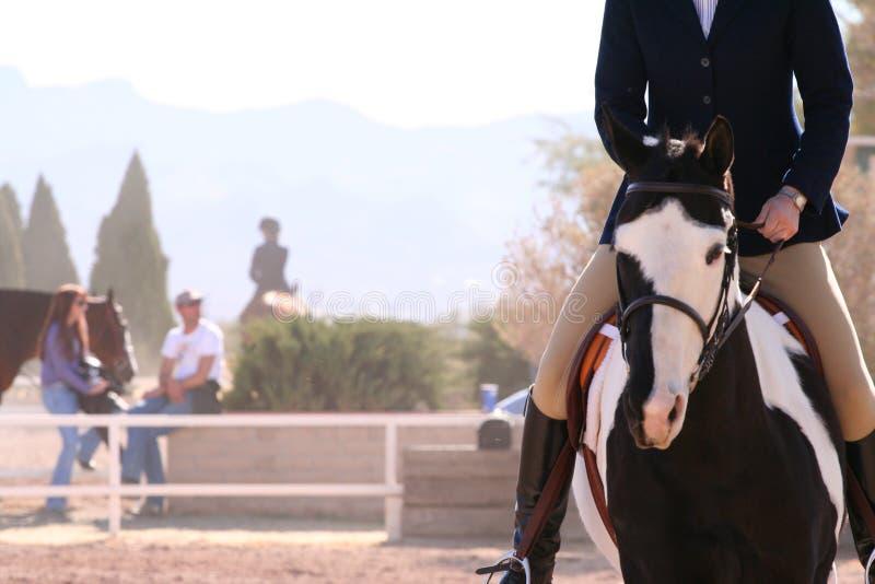 Cavallo verniciato immagine stock libera da diritti