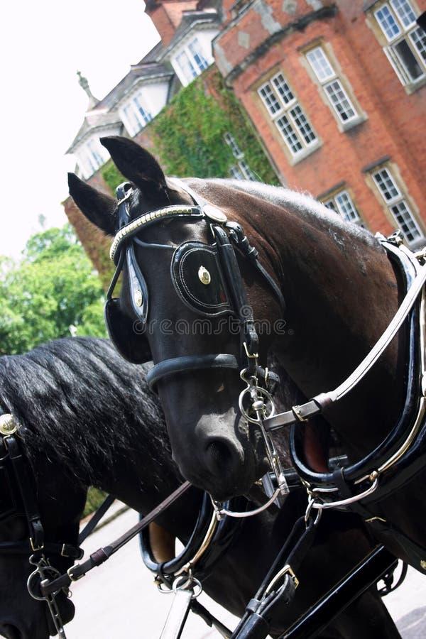 Download Cavallo vestito fotografia stock. Immagine di cavallo, addomesticato - 207346