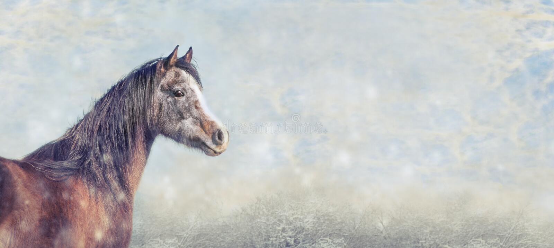 Cavalo árabe bonito no fundo do inverno da neve, bandeira para o Web site imagem de stock