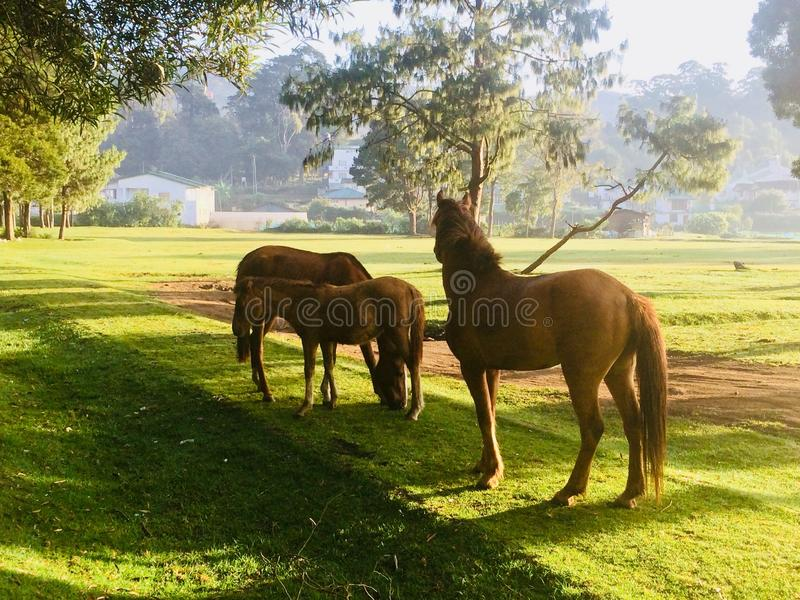 Cavalo foto de stock royalty free