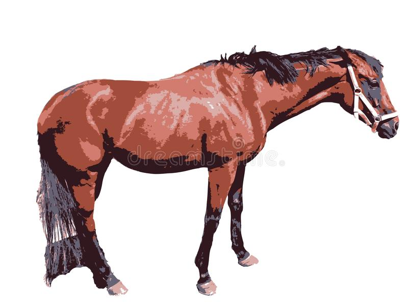 Cavalo foto de stock royalty free
