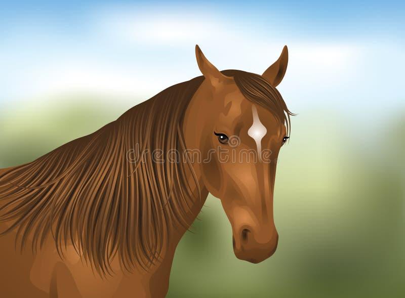 Cavalo. ilustração royalty free