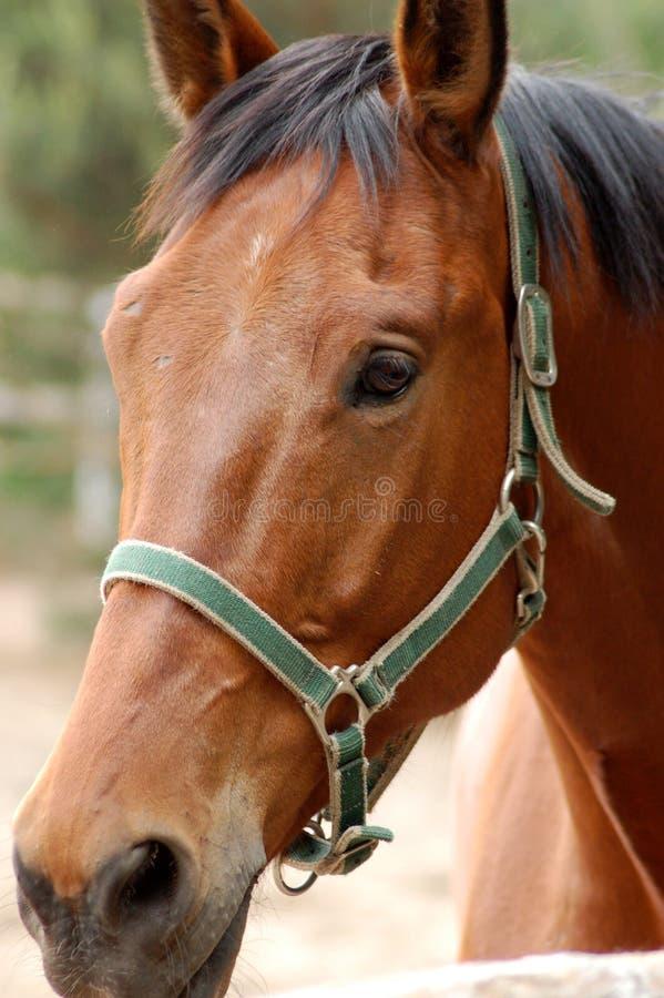 Cavalo #4 imagem de stock
