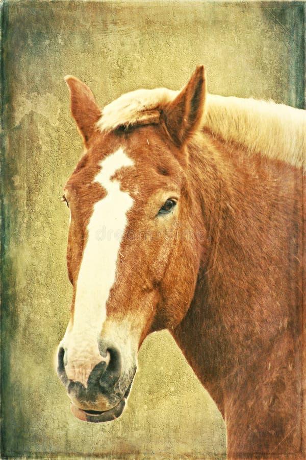 Cavalo belga na textura ilustração stock