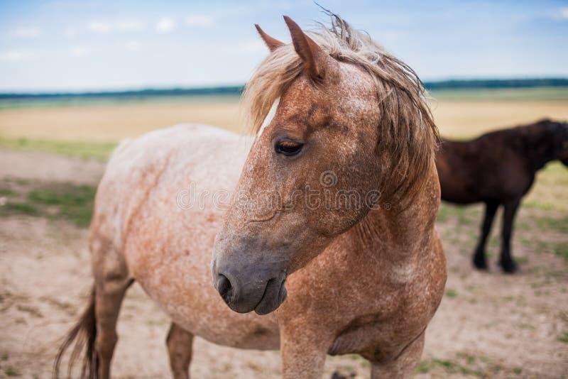 Cavalo bonito amável fotos de stock
