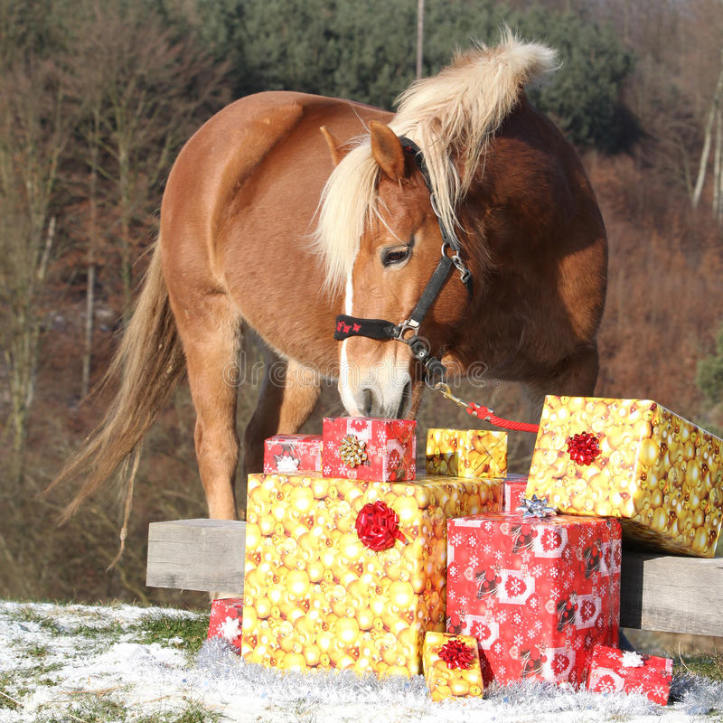 Cavalo bonito com presentes do Natal foto de stock