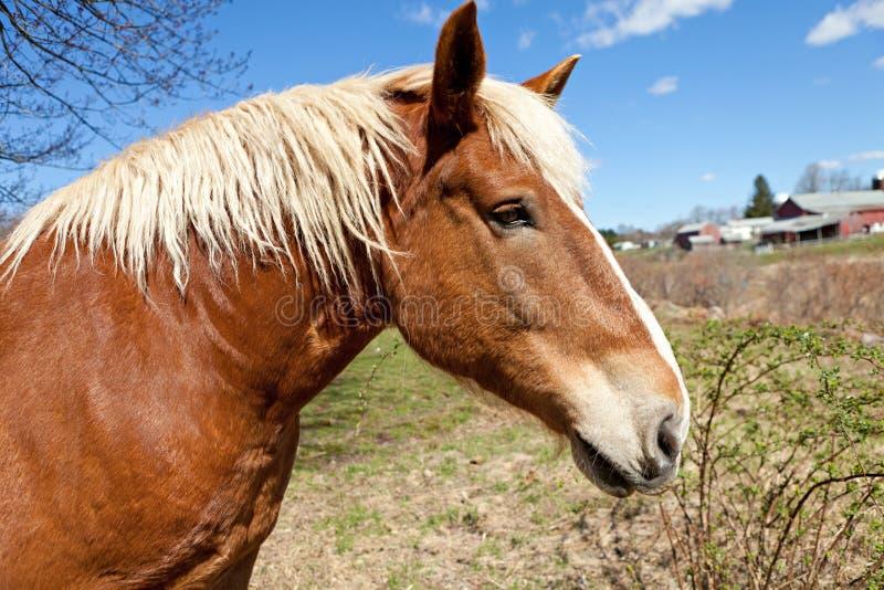 Cavalo bonito de Brown imagens de stock