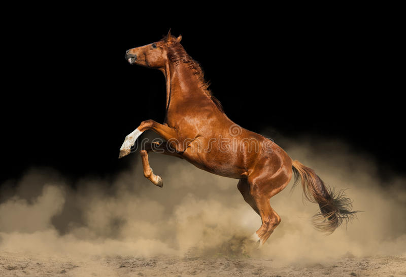 Cavalo bonito do puro-sangue fotos de stock royalty free