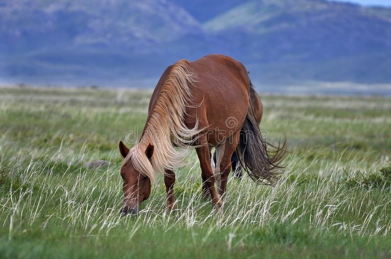 Cavalo bonito em um pasto imagens de stock royalty free