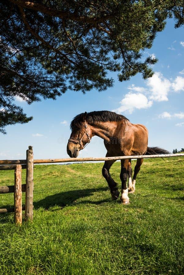 Cavalo bonito que pasta livre na grama fotos de stock royalty free