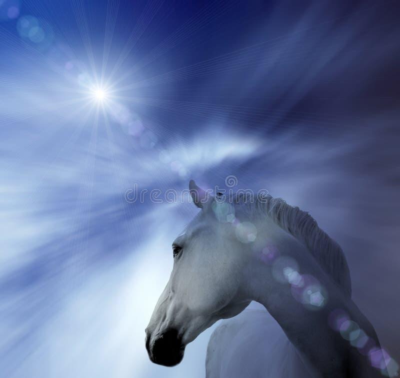 Cavalo branco abstrato fotografia de stock royalty free