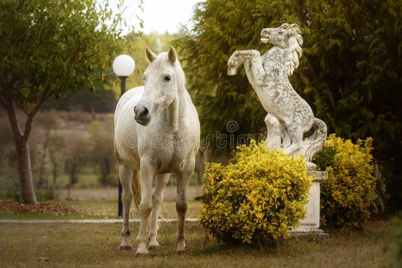 Cavalo branco ao lado de uma estátua equestre em um jardim fotografia de stock