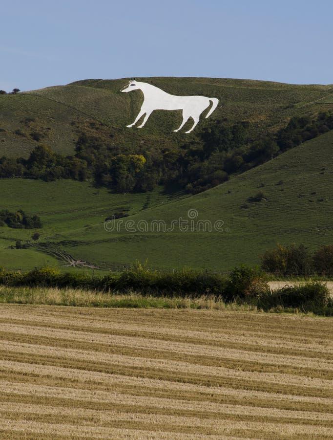Cavalo branco de Westbury fotos de stock royalty free