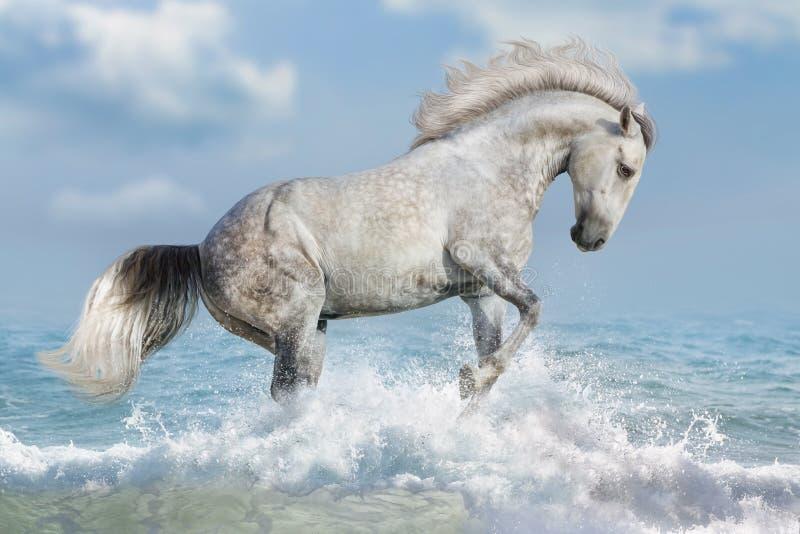 Cavalo branco na água foto de stock
