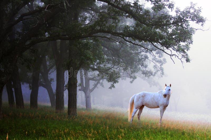 Cavalo branco na névoa