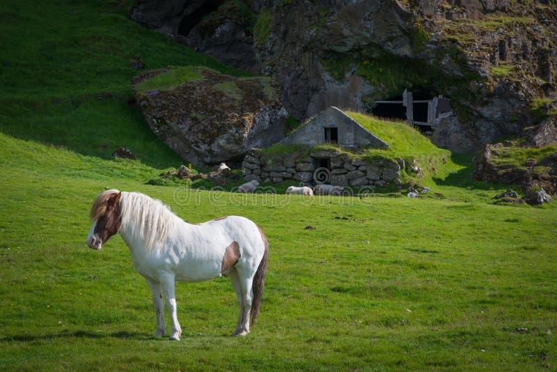 Cavalo branco perto de uma moradia de caverna fotografia de stock