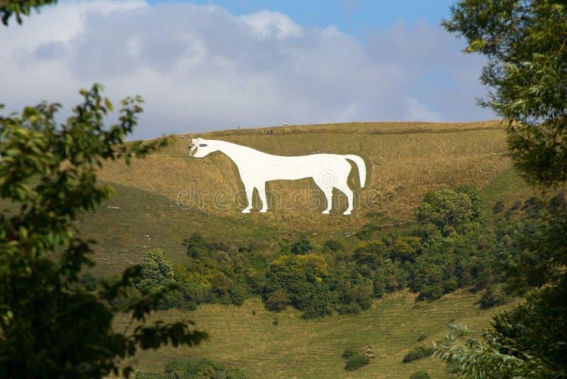 Cavalo branco Westbury fotos de stock