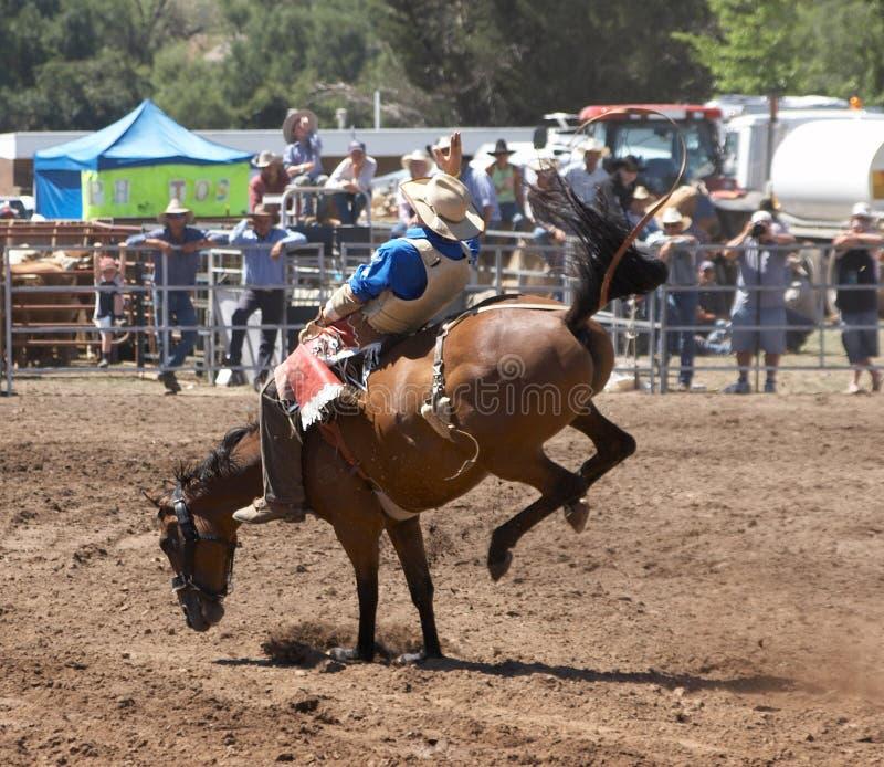 Cavalo Bucking fotografia de stock royalty free