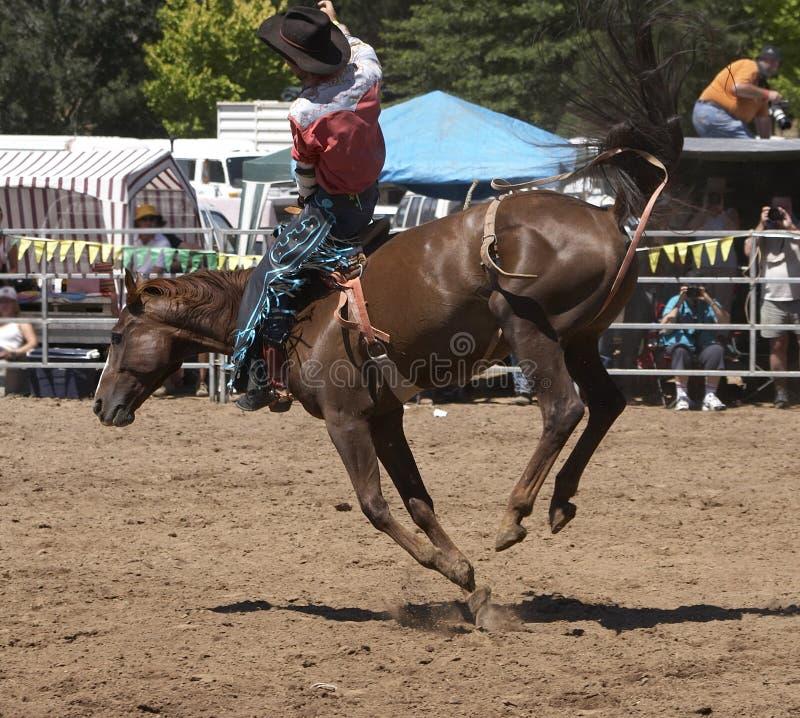 Cavalo Bucking imagem de stock royalty free