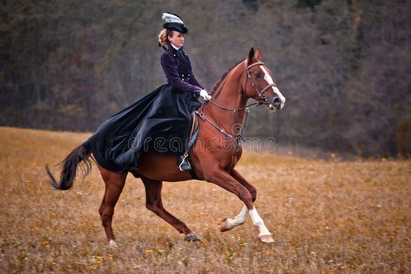 Cavalo-caça com as senhoras no hábito de equitação foto de stock royalty free