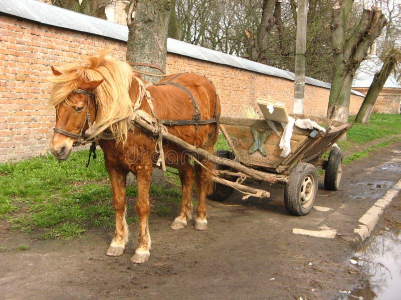 Cavalo cansado com um carro imagem de stock