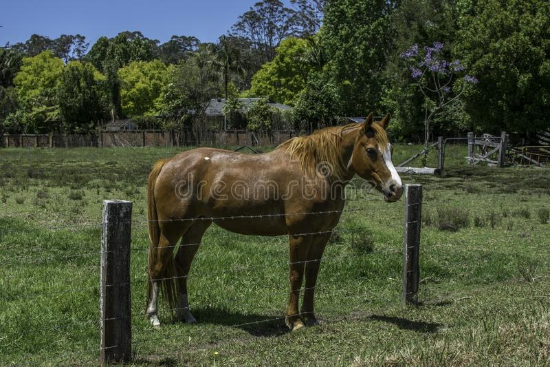 Cavalo, castanha cercada no prado fotos de stock
