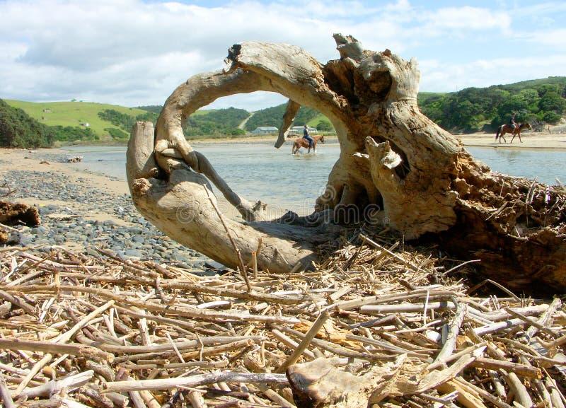 Cavalo-cavaleiro quadro na cena do rio foto de stock