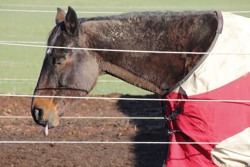 Cavalo com botulismo foto de stock royalty free