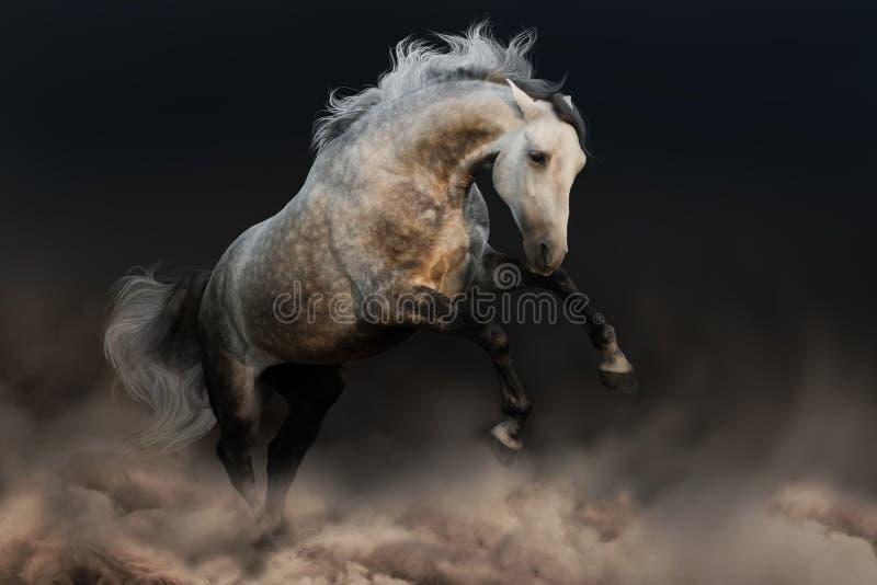 Cavalo com juba longa imagens de stock royalty free