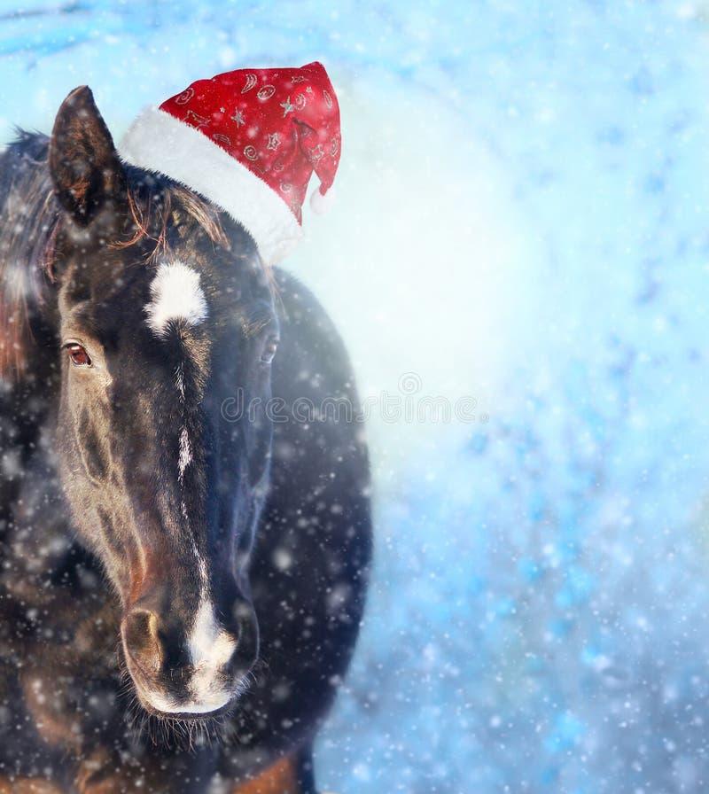 Cavalo com o chapéu de Santa no showfall, fundo do Natal fotografia de stock royalty free
