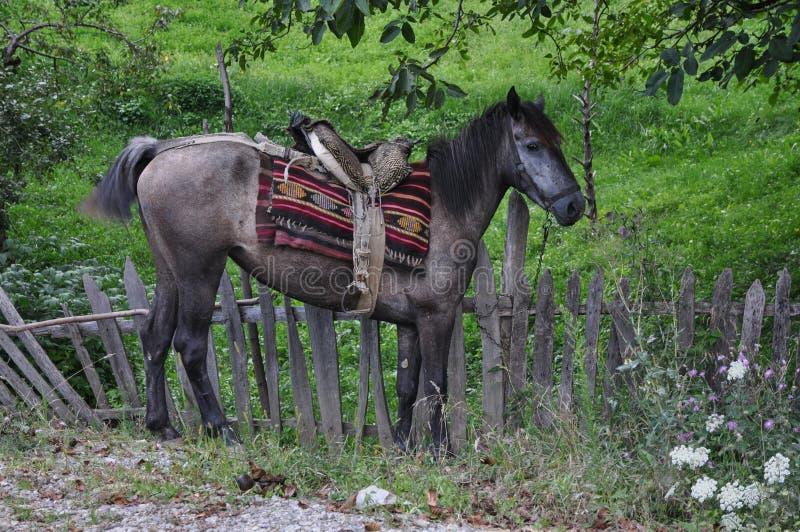 Cavalo com sela fotografia de stock