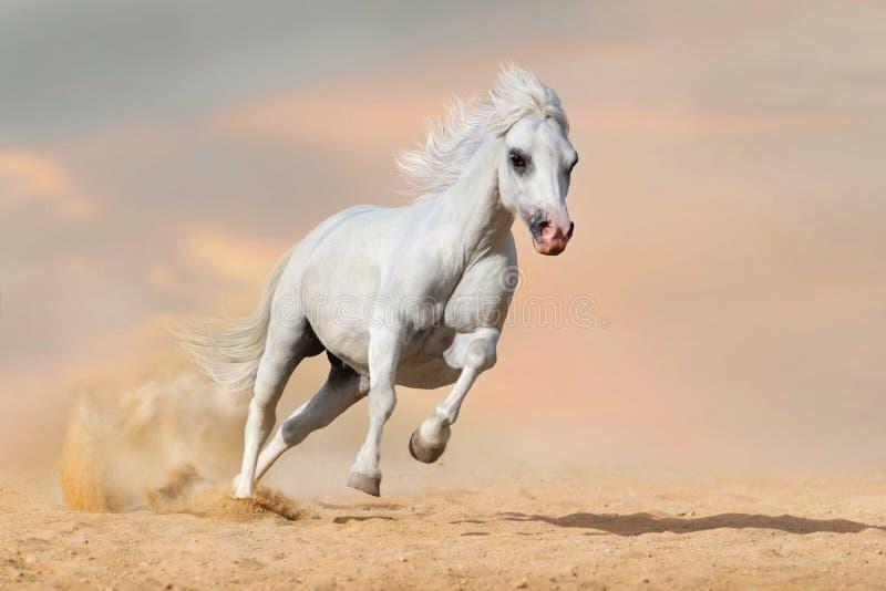 Cavalo corrido no deserto foto de stock royalty free