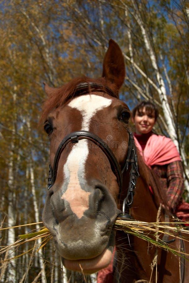 Cavalo curioso imagens de stock royalty free