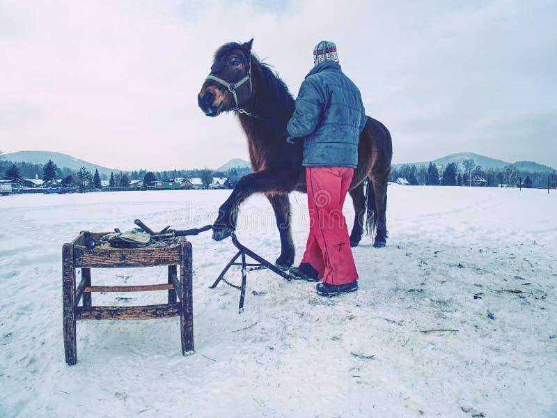 Cavalo da posse do empregado da explora??o agr?cola no prado para a verifica??o dos cascos fotografia de stock royalty free