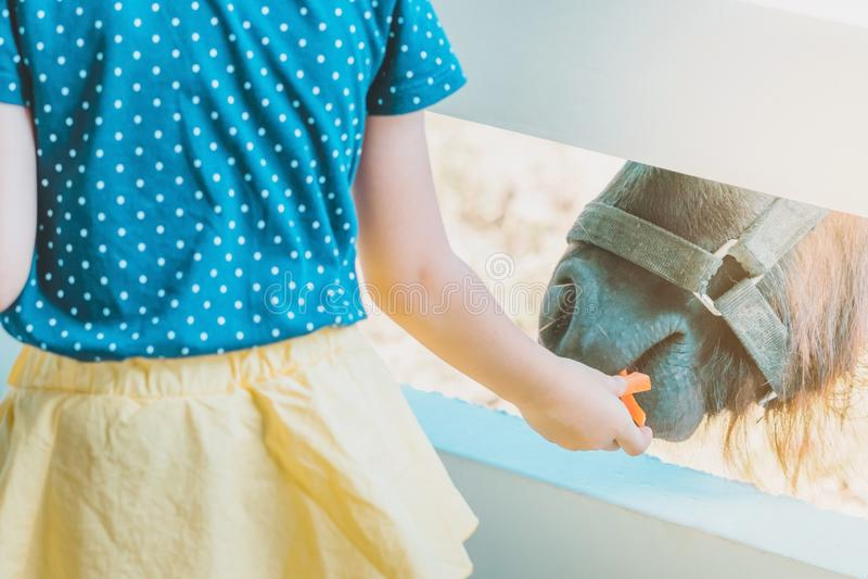 Cavalo de alimentação da menina em sua exploração agrícola através de um brejo de madeira branco imagem de stock
