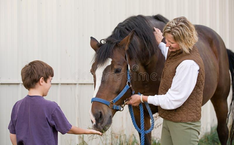 Cavalo de alimentação do menino