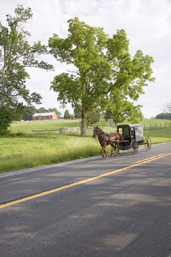 Cavalo de Amish imagens de stock