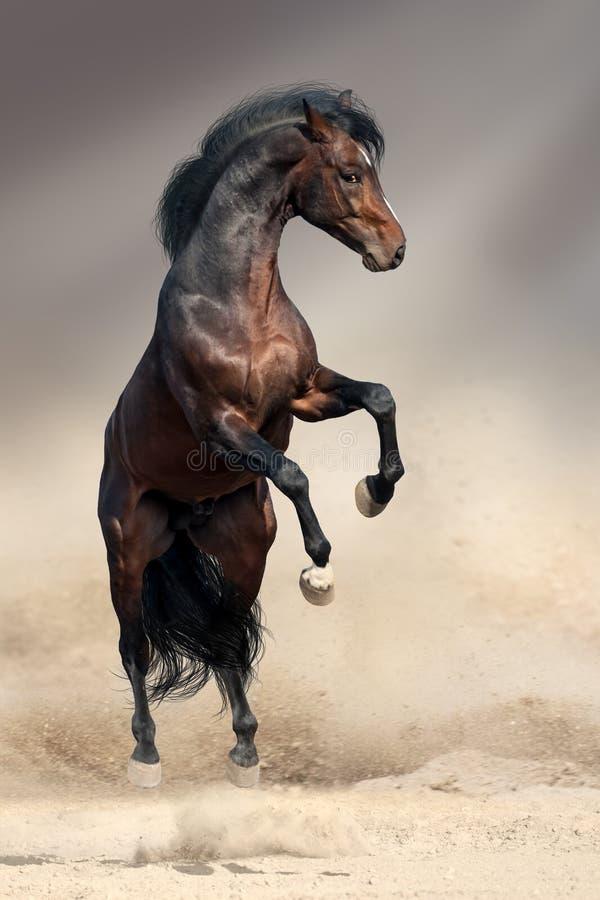 Cavalo de baía que eleva acima imagens de stock royalty free
