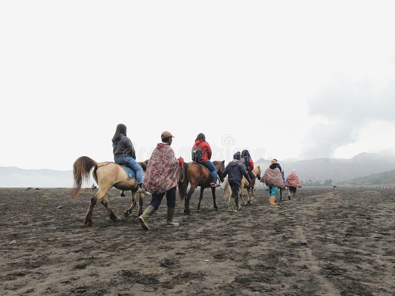 Cavalo de Bromo fotos de stock royalty free