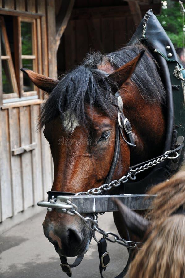 Download Cavalo de carro foto de stock. Imagem de esgotado, pessoa - 12806630